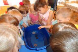 В группе «Колокольчики» провели эксперимент с водой «Что плавает, а что тонет»